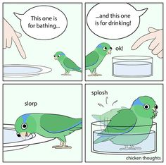 20 Funny Pics & Memes Compilation – Very Funny Laugh Funny Birds, Cute Birds, Cute Funny Animals, Funny Cute, Cockatiel, Budgies, Bird Meme, Animal Pictures, Funny Pictures