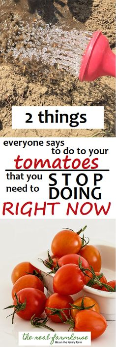 be warned what tomato advice may not be entirely correct