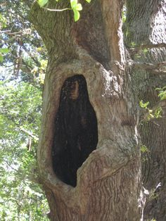 Squirrel Home, Cape Town, Gardens, Plants, Outdoor Gardens, Plant, Garden, House Gardens, Planets