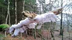 Rare Hair Ice Spotted in Scottish National Park (PHOTOS)   The Weather Channel