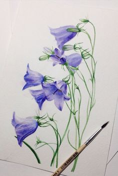 Watercolor bluebells .My camera made bluebells a little bit more blue than they are