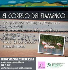 Ven a disfrutar del cortejo del flamenco, en la Laguna de Fuente de Piedra, Málaga.