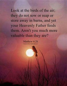 Matthew 6:28