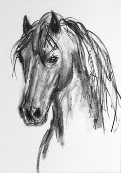Horse original charcoal drawing'Introspective' by FerraroFineArt