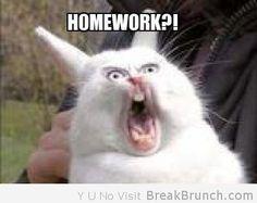 Homework Cat :D