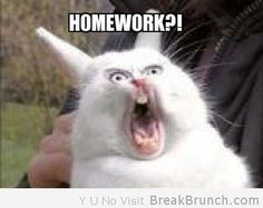 Google Image Result for http://breakbrunch.com/wp-content/uploads/2012/05/what-homework-funny-animal-picture.jpg