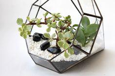 Флорариум геометрический Кристалл с миксом суккулентов и кактусов,  23*15 см