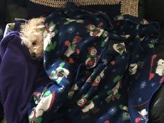 Cozy wozy Jazz in my chair with my Christmas blanket.
