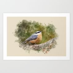 Buy Nuthatch Watercolor Art by Christina Rollo as a high quality Art Print. Worldwide shipping available at Society6.com. Just one of millions of products available.