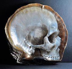 A selection of creationsby the artistGregory Halili, who uses seashells likepearl oysters to create highly realistic skulls thanks toa subtle mixbetwe