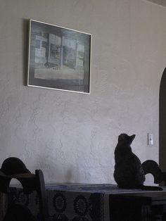 Cat Critic   Flickr - Photo Sharing!