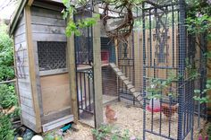 In the Dog House - Kreg Owners' Community Permaculture, Chicken Enclosure, Chicken Shed, Future Farms, Niches, Chickens And Roosters, Hen House, Green Garden, Small Patio