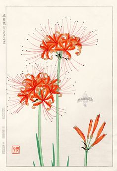 Ghost Flower Lily from Shodo Kawarazaki Spring Flower Japanese Woodblock Prints