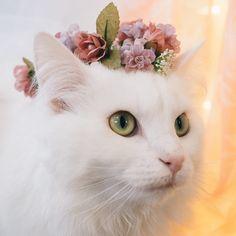 "catsandkitten: ""decidiu fazer uma coroa de flores para o meu gato Hani"""