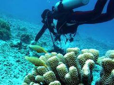 座間味島ダイビングツアー アマビーチ・ブツブツサンゴ