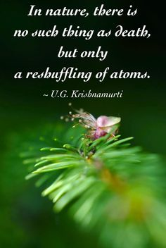 """""""In nature there is no such thing as death but only a reshuffling of atoms.""""  ~ U.G. Krishnamurti"""
