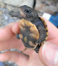 21 Of The Most Adorable Baby Turtles