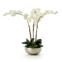 white orchid silver pot