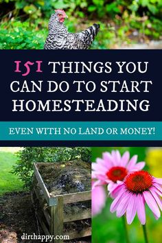 151 Things You Can do to Start Homesteading - Even With No Land or Money - Homesteading is a way of life, not where you live! #homesteading #dirthappy
