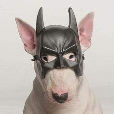 I'm not saying I'm Batman I'm just saying no one has ever seen Batman and me in the same room together.