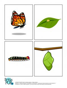 Life Cycle Of A Monarch Butterfly Coloring Page From Butterfly