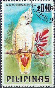 Pilipinas: Cacatua haematuropygia, Red-vented   cockatoo - (cacatua Vermelho-exalado)