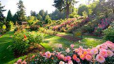 Washington Park Rose Garden Portland Oregon - Bing Images