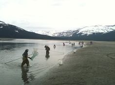 Dipnetting for hooligan (eulachon) in the Turnagain Arm.