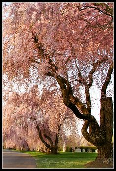 Pink tree #candigardenparty