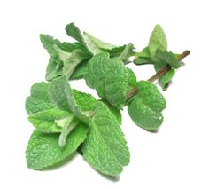 Peppermint; Can be used for: Acne, Arthritis, Belching, Body Odor, Colds & Flu, Coughs, Extra Energy, Fatigue, Flatulence, Foot Problems, Headache, Indigestion, Irritable Bowel Syndrome, Morning Sickness, Nausea & Vomiting, Pain Relief, Sinusitis, Skin Care, Sore Throat, and Stings & Bites. home remedies.