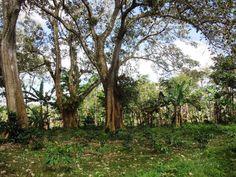 Finca el Peten - coffee farm in Nicaragua