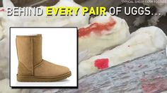 #UGGs aren't just ugly—they are made from the skin of abused & terrified sheep. 😔 @UGG #WearYourOwnSkin #WearVegan #SheepOfIG #peta2life
