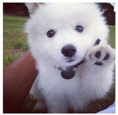 adorable, like my Poncho!!