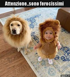 best Labrador stikers for Baby Puppies, Baby Dogs, Cute Puppies, Dogs And Puppies, Beagle Puppies, Baby Animals, Funny Animals, Cute Animals, Funny Dogs