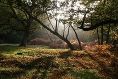 The New Forest, Hampshire UK https://www.facebook.com/NewForestTour