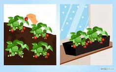 7 Maneras de cultivar Fresas