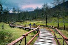 Boardwalk to the deer's forest of Huilo Huilo Natural Reserve at the. Central America, South America, Latin America, Sur Chile, Areas Protegidas, Chili, Fence Design, End Of The World, Patagonia