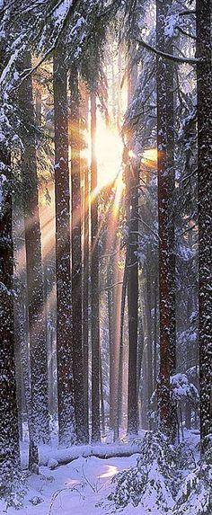 Solstice in the Olympic National Park of northwestern Washington by John Shephard Christmas in Washington State