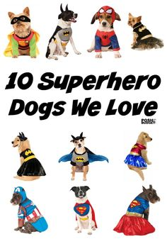 10 Superhero Dogs We Love- OMG These dogs are so cute in these super hero Halloween costumes for pets. I love Batman, Robin, Spiderman, and of course Wonder Woman lol so funny
