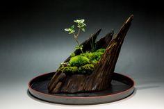 裏ワザ24 癒しの苔盆栽 里山の風景の画像(写真)