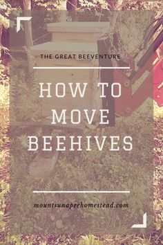 5f1722b7131e How to Move Beehives...and not get stung
