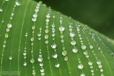 Macro Photography – 10 Beautiful Photographs of Water Drops