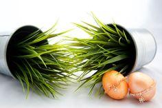 Frische Farben für den Frühling bei schmuckstueckshop.tictail.com  http://schmuckstueckshop.tictail.com/products/halbedelstein-1017436