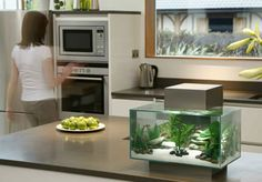 Aquarium in the kitchen. Fluval Edge.