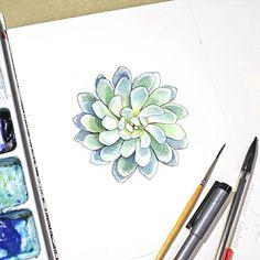 Working on some new ink and watercolor succulent rosettes! Also - reminder that I'm doing Free shipping in the US for all orders in my shop until Dec 16th (and $10 International shipping!) Check the link in my profile.#watecolor#echeveria