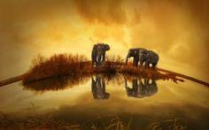 WALLPAPERS HD: Thailand Elephants
