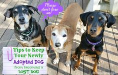 Tips to Keep Your Newly Adopted Dog from becoming a Lost Dog | Lost Pet Prevention | Dog Mom | Rescue Dog | Pet Adoption | Lost Dogs | Dog Products #sponsored