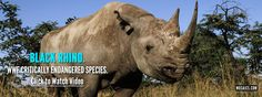 The World is Where We Live (Video) #rhino #endangered