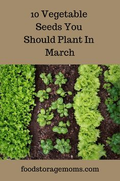 March Garden Seeds Can you use some help on gardening? There is nothing better than picking your own vegetables in your back yard.