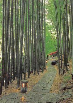 Japan Bamboo Grove Symol of Ssaga | eBay